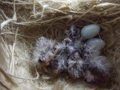 Nest of CFW's