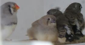 mum and chicks 2.jpg